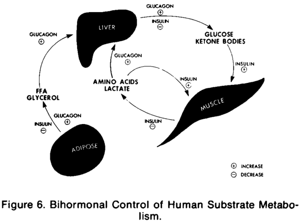 Bihormonal diabetic ketoacidosis